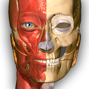 AnatomyLearning — 3D Atlas
